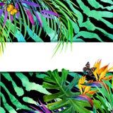 Concepto tropical del verano para el diseño planta de la acuarela Foto de archivo