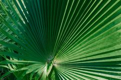 Concepto tropical mínimo hojas del primer del palma fotografía de archivo