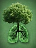 Concepto verde Imagen de archivo libre de regalías