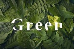 Concepto verde de la palabra de follaje salvaje de la selva Foto de archivo libre de regalías