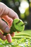 Concepto verde del enchufe eléctrico Foto de archivo