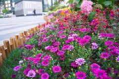 Concepto verde, flor hermosa y decoración Fotos de archivo