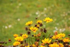 Concepto verde, flor hermosa y decoración Fotografía de archivo libre de regalías