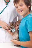 Concepto veterinario del cuidado Imagen de archivo libre de regalías