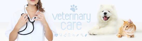 Concepto veterinario del cuidado manos con ingenio del estetoscopio, del perro y del gato Foto de archivo libre de regalías