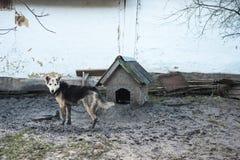 Concepto - vida del perro Perro en el correo, pantano bajo pies, Ucrania Foto de archivo libre de regalías
