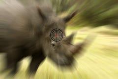 Concepto y blanco anti-que escalfan del rinoceronte Imagenes de archivo