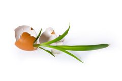 Concepts egg isolated on white Stock Photography