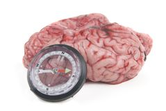 Conceptual alzheimer image with compass and brain Royalty Free Stock Photos
