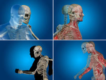 Conceptual Anatomy human body Royalty Free Stock Image