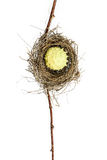 Conceptual Bird Nest. Conceptual bird nest isolated on white background Royalty Free Stock Photography