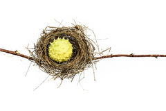 Conceptual Bird Nest. Conceptual bird nest isolated on white background Stock Photography