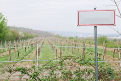 Conceptual blank sign in front of vineyard stock photography