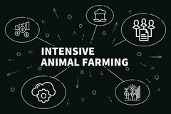 Conceptual business illustration with the words intensive animal. Farming Royalty Free Stock Image