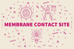 Conceptual business illustration with the words membrane contact. Site Royalty Free Stock Photography