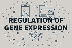Conceptual business illustration with the words regulation of ge. Ne expression Royalty Free Stock Image