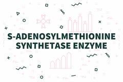Conceptual business illustration with the words s-adenosylmethio. Nine synthetase enzyme Stock Photos