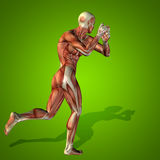 Conceptual 3D human man health anatomy Stock Image