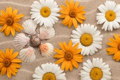 Conceptual daisy made of seashells among the daisies, lying on the sand. View from above Stock Image