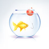 Conceptual Fish in danger Stock Images