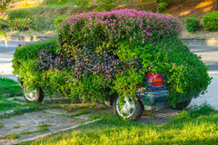 Conceptual flower decoration of old car Stock Image