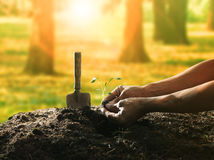Conceptual of hand planting tree seed on dirty soil against beau. Tiful sun light in plantation field use for human activities and future growthing Stock Photography