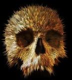 Conceptual human skull Stock Image