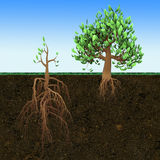 Conceptual illustration. Big tree with small roots and little  tree with large roots. Conceptual 3d illustration. Big tree with small roots and little  tree with Stock Photography