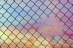Conceptual image of birds flying in the shape of v in the hole of steel mesh wire fence. Concept of hope and freedom stock images