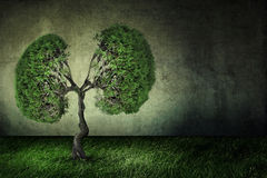 Conceptual image of green tree shaped like human lungs. Ecology global warming concept Royalty Free Stock Photos