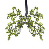 Conceptual image of green tree shaped like human lungs isolate o Stock Images
