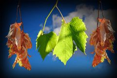 Conceptual image of life and death with leaves Royalty Free Stock Photography