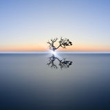 Conceptual image of single tree in still water with sunburst Stock Image