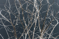 Tree branches in dark night Stock Photography