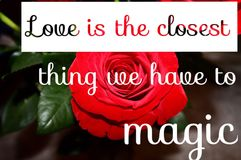 Conceptual red rose macro. Conceptual image with white text on red rose blooming. macro and blurred background. Love is the closest thing we have to magic Stock Images