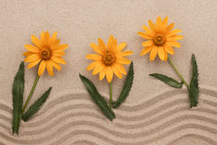 Conceptual image of yellow daisies growing from sand. Stock Photography