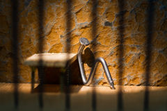Conceptual jail photo with iron nail sitting behind bars. Conceptual jail photo with iron nail sitting behind out of focus bars royalty free stock image