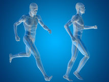 Conceptual man or human 3D anatomy or body on blue. Background Royalty Free Stock Photography