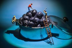 Blueberry miner  workers in a pot. Conceptual miner workers working the blueberry fruits in a pot Royalty Free Stock Photo