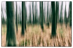 A conceptual photo using slow shutter speed of trees in a forest showing green and orange leaves with a strong vintage filter Stock Images