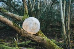 A conceptual photograph of a glowing moon between branches royalty free stock photo