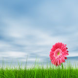 Conceptual pink flower in green grass Stock Photo
