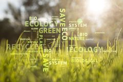 Conceptual eco green word cloud on sunny meadow Royalty Free Stock Photography