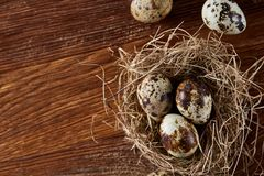 Conceptual still-life with quail eggs in hay nest over dark wooden background, close up, selective focus. Conceptual still-life with fresh raw spotted quail eggs royalty free stock photos