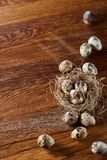 Conceptual still-life with quail eggs in hay nest over dark wooden background, close up, selective focus. Conceptual still-life with fresh raw spotted quail eggs royalty free stock images