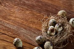 Conceptual still-life with quail eggs in hay nest over dark wooden background, close up, selective focus. Conceptual still-life with fresh raw spotted quail eggs royalty free stock photography