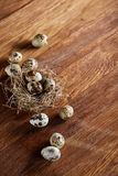 Conceptual still-life with quail eggs in hay nest over dark wooden background, close up, selective focus. Conceptual still-life with fresh raw spotted quail eggs royalty free stock image