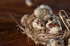 Conceptual still-life with quail eggs in hay nest over dark wooden background, close up, selective focus. Conceptual still-life with fresh raw spotted quail eggs stock image