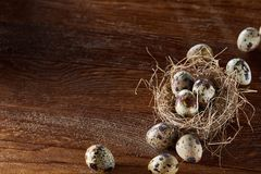 Conceptual still-life with quail eggs in hay nest over dark wooden background, close up, selective focus. Conceptual still-life with fresh raw spotted quail eggs stock photography