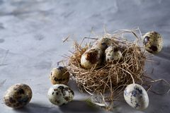Conceptual still-life with quail eggs in hay nest over grey background, close up, selective focus. Conceptual still-life with fresh raw spotted quail eggs in hay stock images